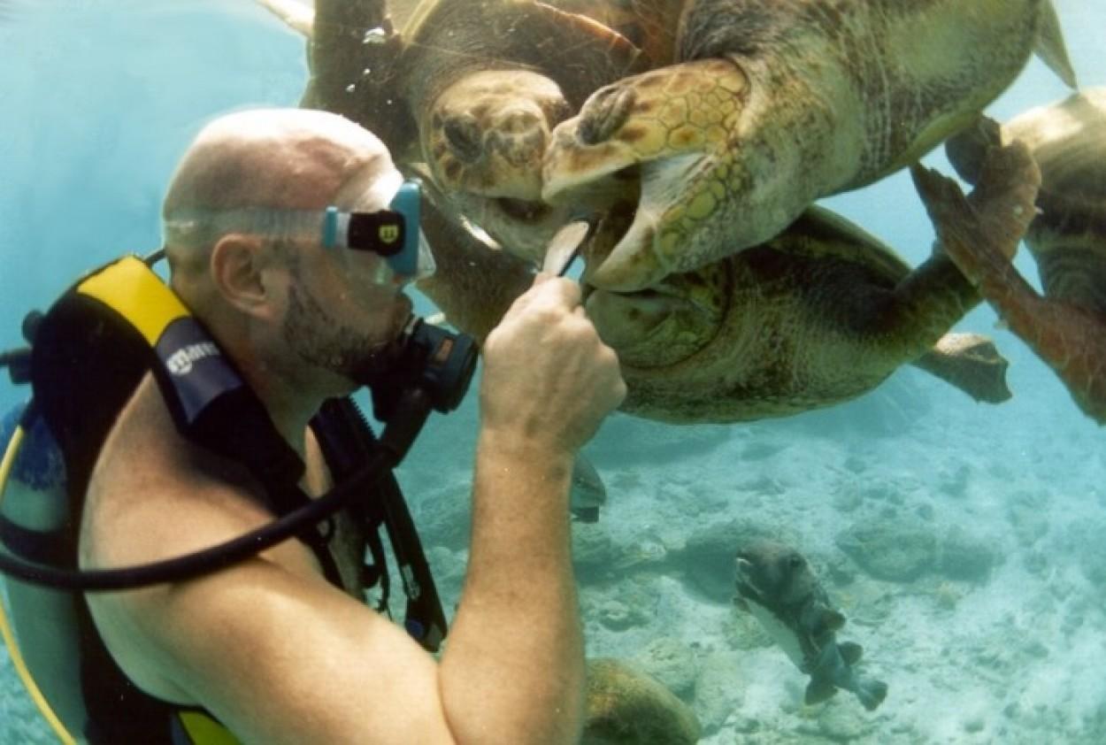 Смешные подводные картинки